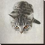 Hello Kitty Impressão em tela esticada por Nadia Attura