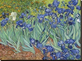 Irises, 1889 Stretched Canvas Print by Vincent van Gogh