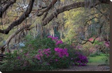 Oaks and Azaleas Stretched Canvas Print by H.J. Herrera