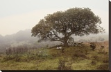 Oak Tree 54 Stretched Canvas Print by Alan Blaustein
