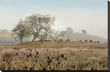 Oak Tree 68 Stretched Canvas Print by Alan Blaustein
