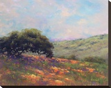 Poppy Hill Stretched Canvas Print by Alice Weil