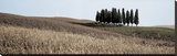 Val d'Orcia Pano 3 Stretched Canvas Print by Alan Blaustein