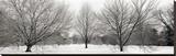 Winter Garden 1 Stretched Canvas Print by Alan Blaustein