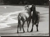 Young Mustangs on Beach Stretched Canvas Print by Traer Scott