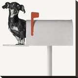 You've Got Mail Stretched Canvas Print by Jon Bertelli