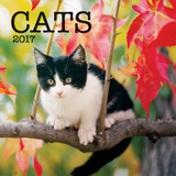 Cats - 2017 Mini Calendar Calendars