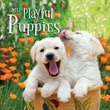 Playful Puppies - 2017 Calendar Calendars