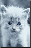 Blue Kitty Stretched Canvas Print by Tracie Louise