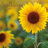 Sunflowers - 2017 Calendar Calendars