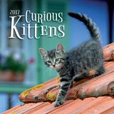 Curious Kittens - 2017 Calendar Calendars