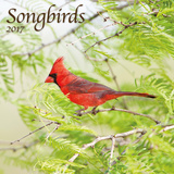 Songbirds - 2017 Calendar Calendars