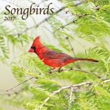 Songbirds - 2017 Calendar Calendars
