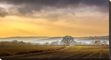 The Farm Stretched Canvas Print by Adelino Gonçalves