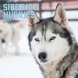 Siberian Huskies - 2017 Calendar Calendars