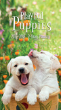 Playful Puppies - 2017 Two-Year Planner Calendars