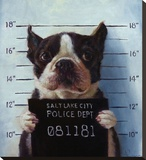 Mug Shot Stretched Canvas Print by Lucia Heffernan