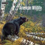 American Wildlife - 2017 Calendar Calendars