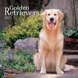 Golden Retrievers - 2017 Calendar Calendars