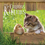 Curious Kittens - 2017 Mini Calendar Calendars