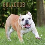 Bulldogs - 2017 Calendar Calendars