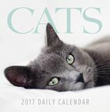 Cats - 2017 Boxed Calendar Calendars