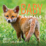 Baby Animals - 2017 Boxed Calendar Calendars
