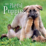 Playful Puppies - 2017 Mini Calendar Calendars