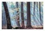 Spellbound Prints by Lars Van de Goor