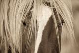 The Blonde Affiches par Lisa Dearing