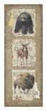 Woodlands III Posters af Anita Phillips