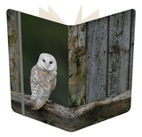 Barn Owl, in Old Farm Building Window, Scotland, UK Cairngorms National Park Notebook by Pete Cairns
