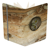 Northern Pygmy Owl, Adult Looking out of Nest Hole in Sycamore Tree, Arizona, USA Notebook by Rolf Nussbaumer