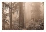 Enchanted Forest II Affiches par Igor Svibilsky