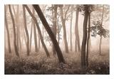 Reticent Woods Art by Igor Svibilsky
