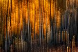 Falling Stars Fotografisk trykk av Ursula Abresch