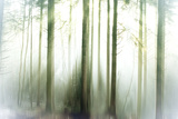 Whiteforest Stampa fotografica di Viviane Fedieu Daniel