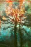 Abstract Forest Stampa fotografica di Viviane Fedieu Daniel