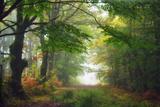 Green Peace Stampa fotografica di Viviane Fedieu Daniel