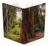 Welcome to Muir Woods 4 Notebook by Vincent James