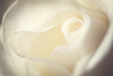 White Rose Photographic Print by Philippe Sainte-Laudy