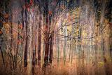 Autumn Riot Photographic Print by Ursula Abresch