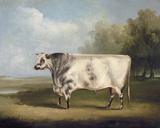 Prize Bull Giclee Print by W.A. Davis