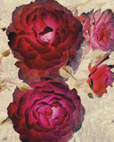 Champagne Floral I Posters by  Collezione Botanica