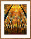 Cathedral Fall Framed Photographic Print by Philippe Sainte-Laudy