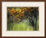 Bittersweet Framed Photographic Print by Ursula Abresch