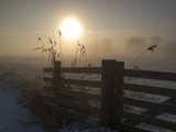 Winter Mood Photographic Print by Alida Van Zaane