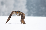 Eurasian Eagle-Owl Photographic Print by Milan Zygmunt