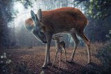 Mother and Fawn Photographic Print by John Wilhelm