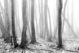 Fog in the Forest Photographic Print by Michael Pettersson
